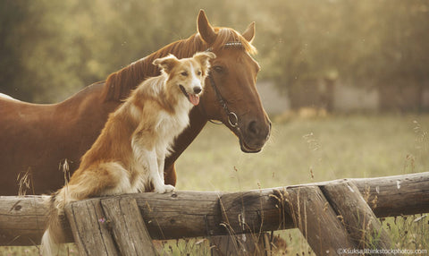 horse and dog
