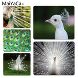 MaiYaCa White peacock staring into the distance Unique Desktop Pad Game Mousepad Size for 18x22x0.2cm Gaming Mousepads - one46.com.au