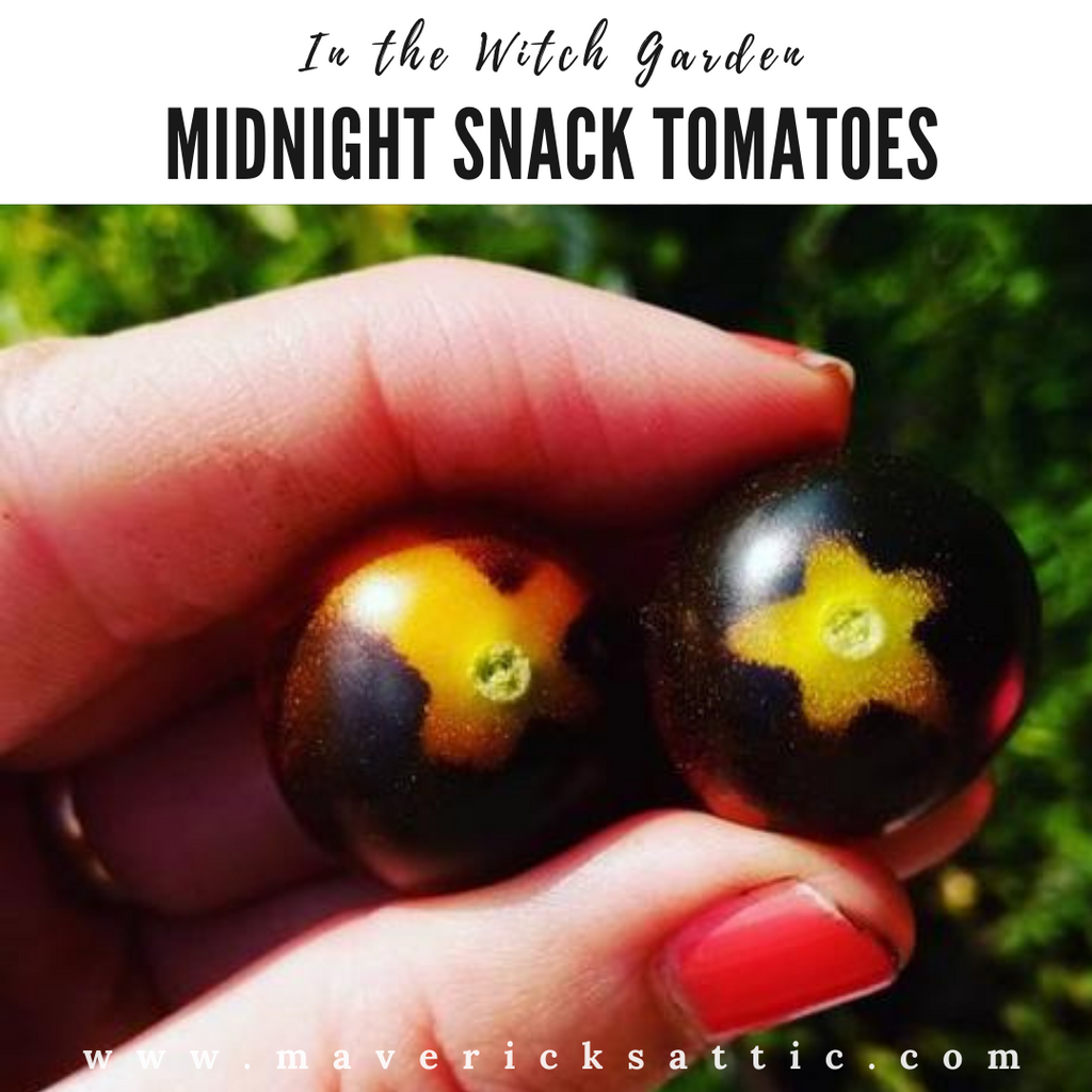Midnight Snack Tomatoes in the Witch Garden
