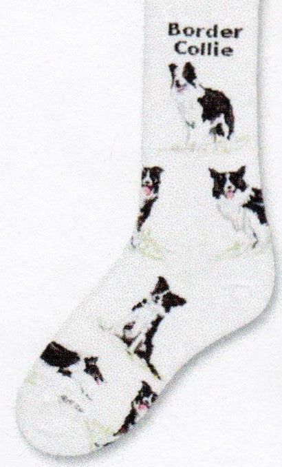 FBF Border Collie Poses 2 Sock starts on Bright White background and has Border Collie written after Cuff. Below are different Poses of the Border Collie.