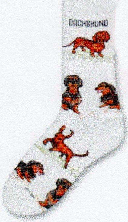 Dachshund Poses 2 Socks by FBF start on a Bright White background with the Word Dachshund below the Cuff. The Poses of different kinds of Dachshunds surround the sock to the toe.
