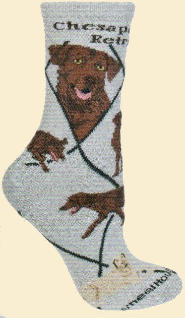 Chesapeake Bay Retriever Sock starts on a Grey background with Black Bold print showing the name of the breed. Black Lines make diamonds over the sock. Portraits show the Chesapeake as a happy large size dog. The poses show the Chesapeake walking, running and laying down.