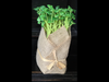 Burlap Wrapped Herbs