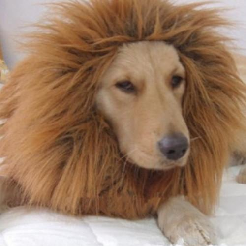 Lion Mane Wig Pet Costume Clothes