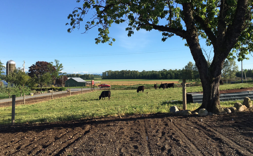 Whatcom County Farm Land