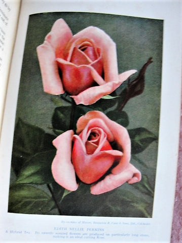 RARE The Rose Encyclopaedia By T Geoffrey W Henslow Organising Secretary Royal International Horticultural Exhibition 1912 A MUST For The Gardner Rose Lover Collectible Book