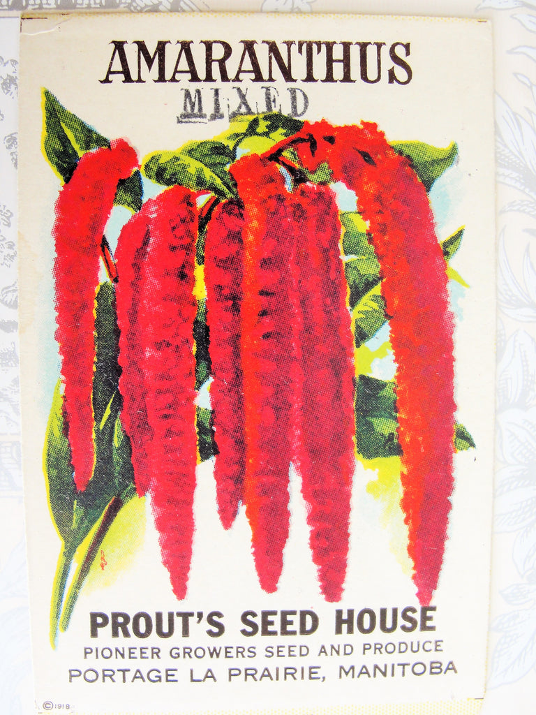 1930s VINTAGE Floral Seed Packet Amaranthus Flowers Colorful Clear Graphics Perfect To Decorate Home, Crafts, Weddings etc