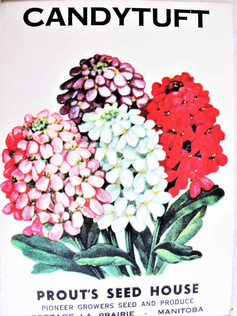 1930s COLORFUL Vintage Floral Seed Packet Perfect To Frame, Scrapbooking, Weddings, Gift For The Gardener