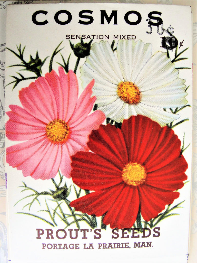 1930s VINTAGE Floral Seed Packet Cosmos Flowers Colorful Perfect To Decorate Home, Crafts, Weddings etc