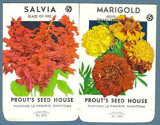 Lovely Old Vintage Seed Packets MARIGOLD and SALVIA Perfect To Frame,Wedding Place Names, Gift For Gardener,Scrap Booking