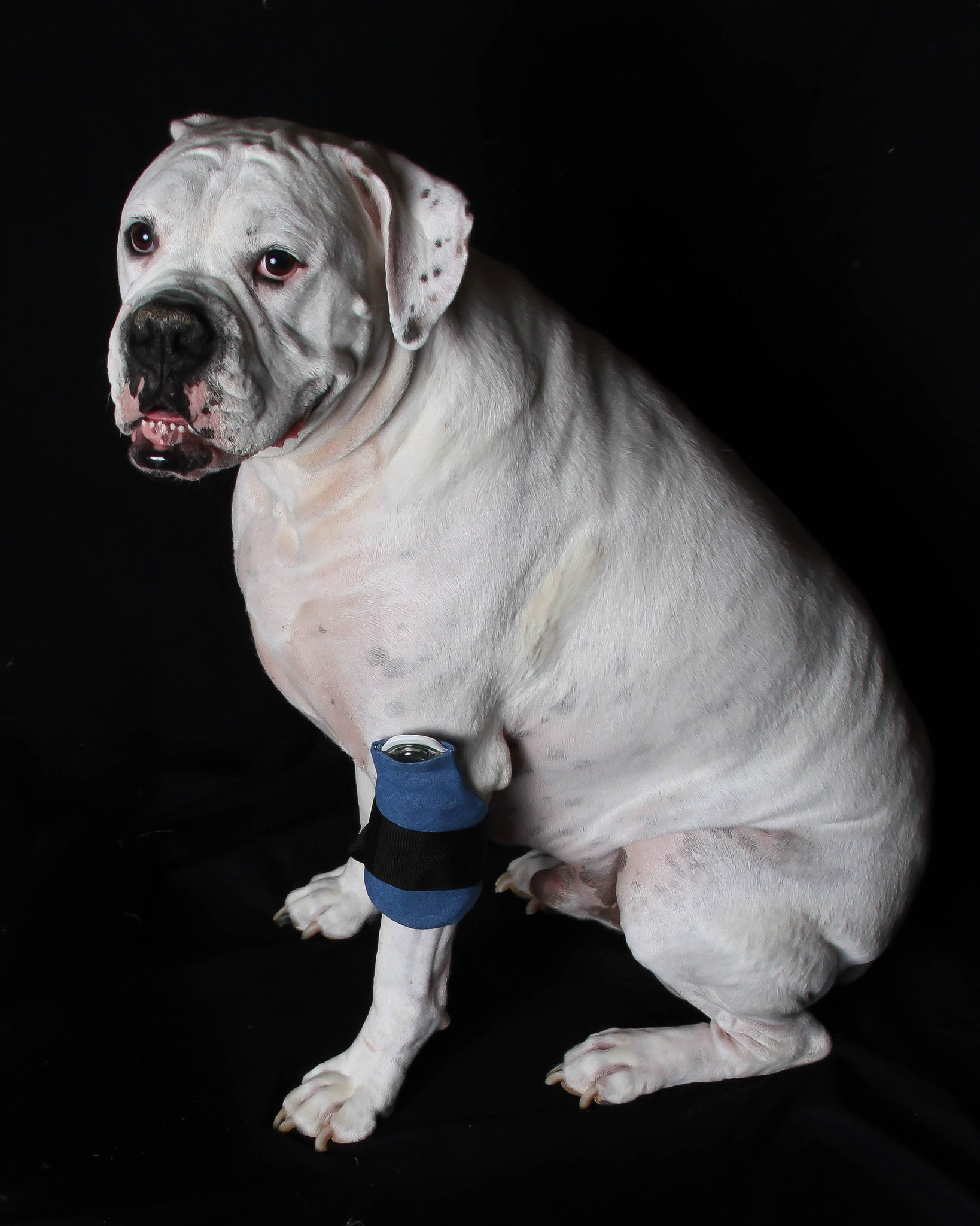 PetPatch Loop Stops Pain and Swelling