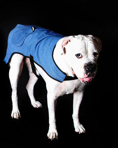 HealFast Recovery Coat for Dogs and Cats