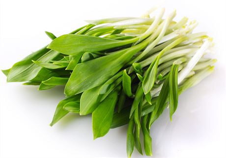 Wild garlic - herbs