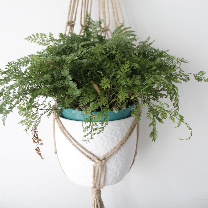 'Intwined' plant hangers