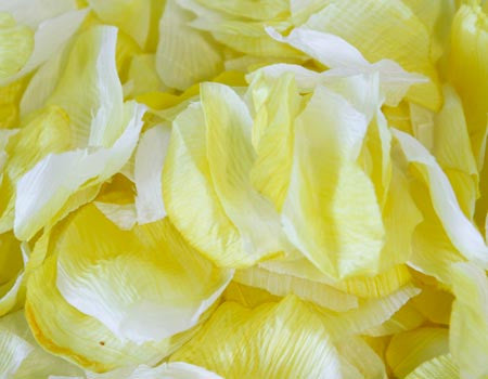 Silk Flower Petal Yellow ( 400 Petals ) -
