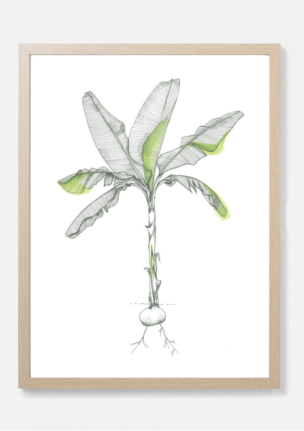 Danby Tropical Banana  Art Print