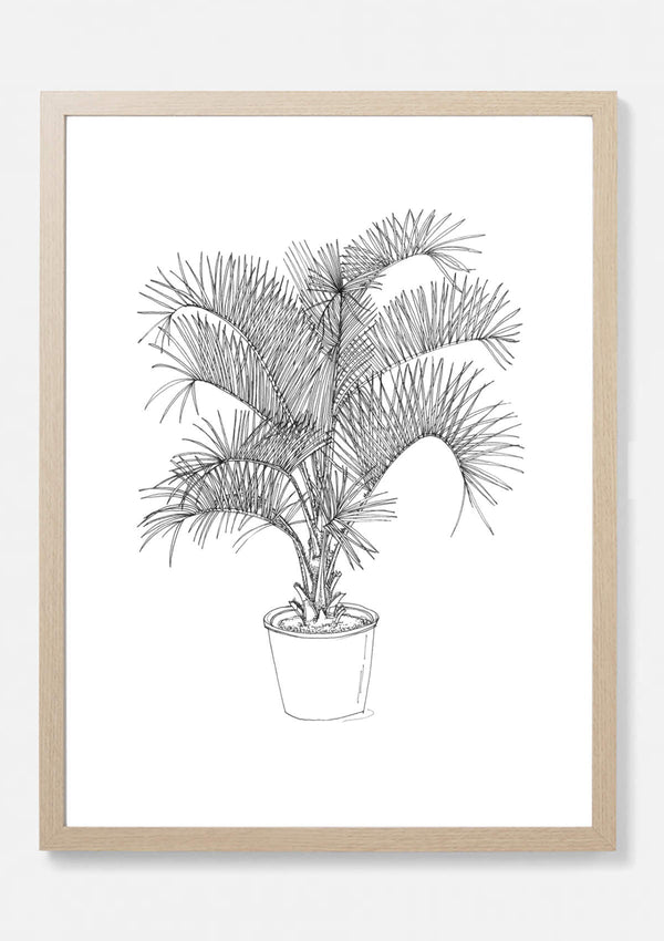 Danby Palm Art Print