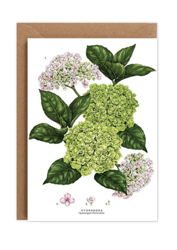 Botanical 'Hydrangea' Species | Greeting Card | Catherine Lewis