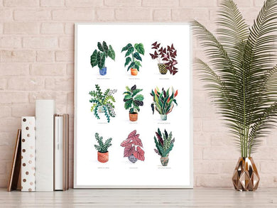 Multi Houseplants A4 Print
