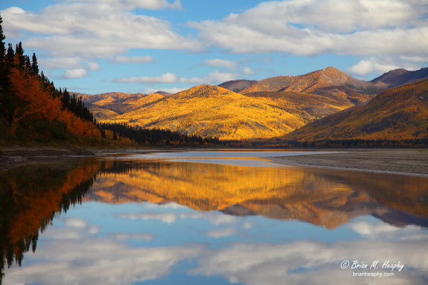 """Yukon Gold"" - Matted and Framed Luster Print"