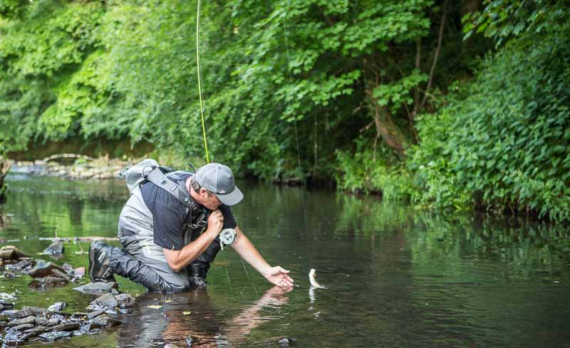 Tom Bell bringing a wild trout to hand on the dry fly