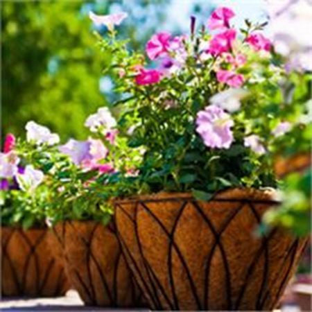 Hanging Baskets and Flowering Baskets