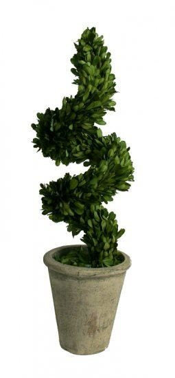 Mills Floral Preserved Boxwood Spiral 16-inch Topiary Set - Life onPlum