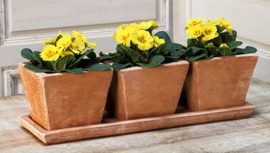 Campania International Tres Pequenos Planter Set of Three in Terra Nova - Life onPlum