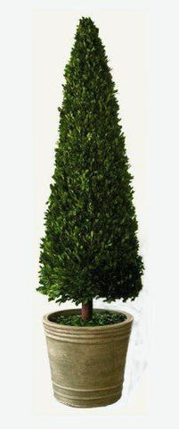 Image of Mills Floral Extra Extra Large 59-inch Preserved Boxwood Cone Topiary Life on Plum