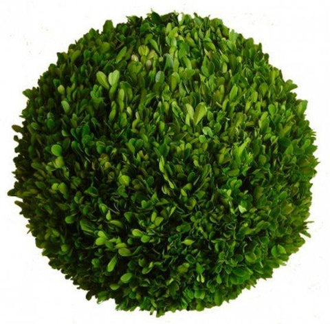 Mills Floral Preserved Boxwood 10-inch Ball Life on Plum