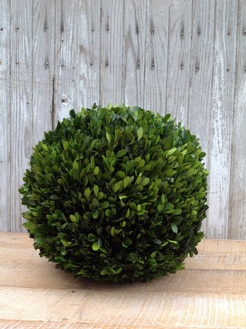 Image of Mills Floral Preserved Boxwood 16-inch Ball Life on Plum