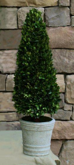 Mills Floral Preserved Boxwood 30-inch Cone Topiary Life on Plum