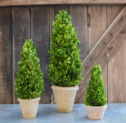Image of Mills Floral Small 16-inch Preserved Boxwood Cone Topiary