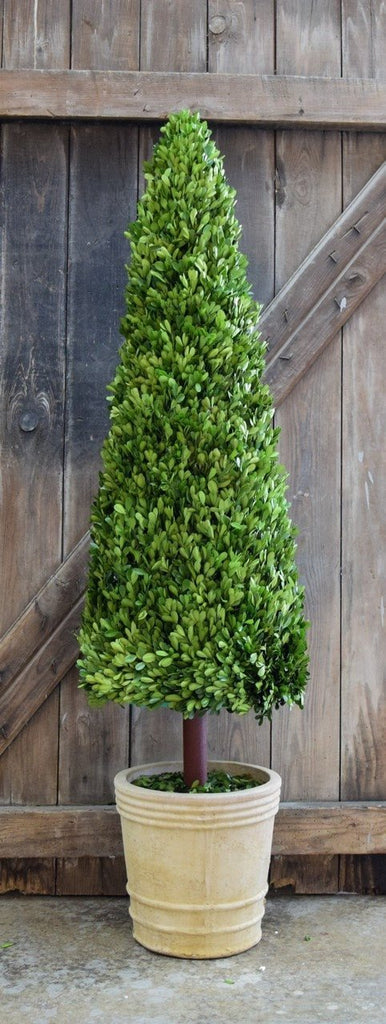 Mills Floral Extra Extra Large 59-inch Preserved Boxwood Cone Topiary