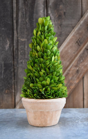 Image of Mills Floral Preserved Boxwood 11-inch Cone Topiary