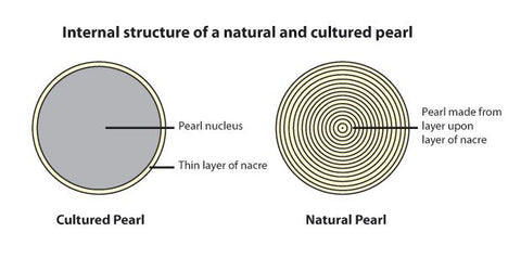 Cultured vs Natural Pearl Diagram