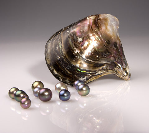 Rainbow Lip Oyster Pteria sterna & Cultured Pearls