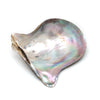 "Polished ""Rainbow Lip"" Shell (Pteria sterna) from the Sea of Cortez"