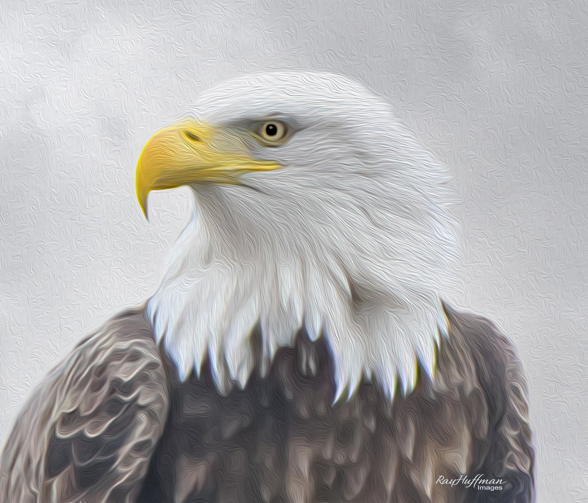 American Bald Eagles - Photography and Paintings