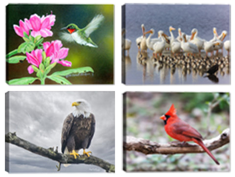 All Bird Images