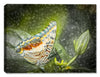 The Butterfly - Fine Art Canvas - Canvas Art Plus