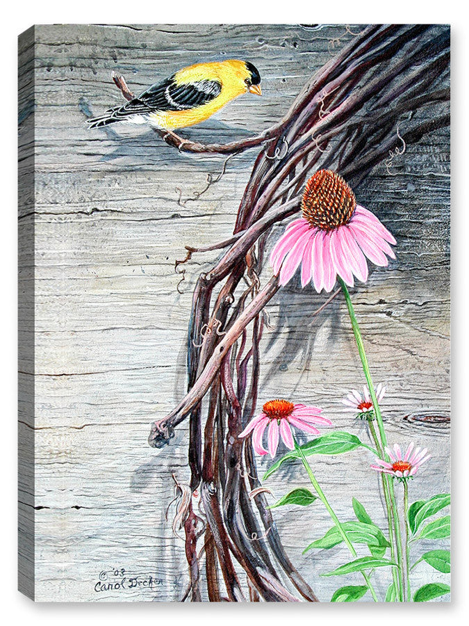 American Goldfinch on Vine - Canvas Art Plus