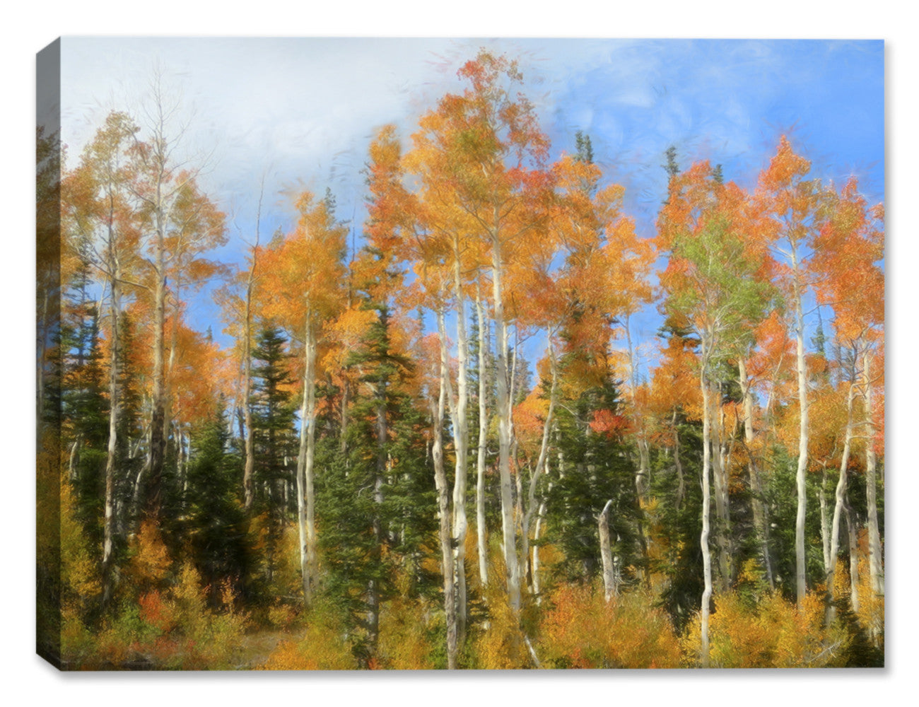 Aspen Trees - Weatherprint Art