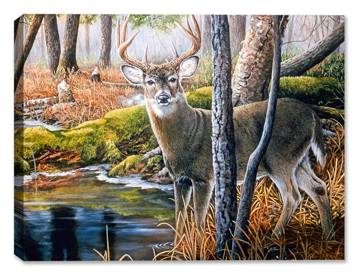 Beaver Pond Buck by Carol Decker - Canvas Art Plus