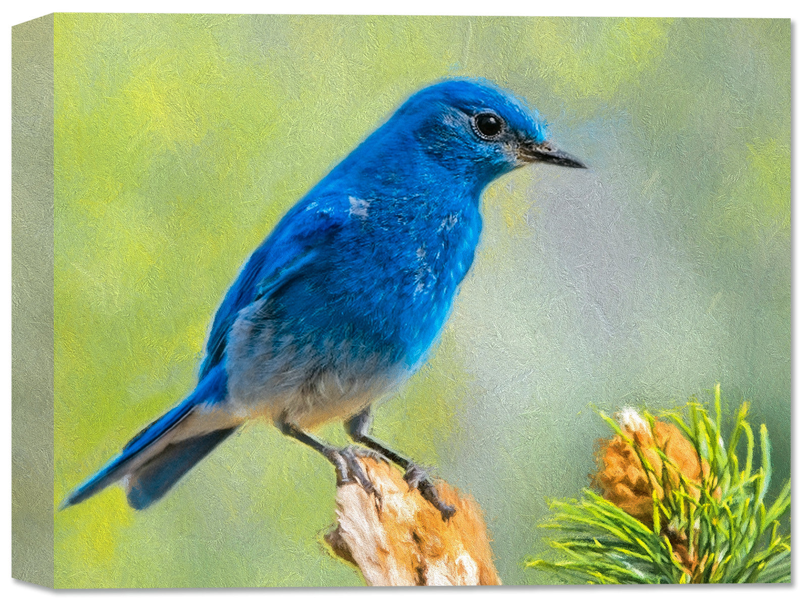 Blue Bird Fine Art Canvas Print - Canvas Art Plus