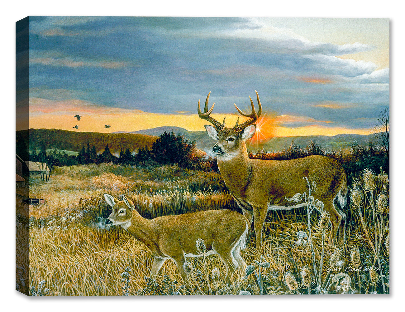 Buck & Foal at Sunset - Canvas Art