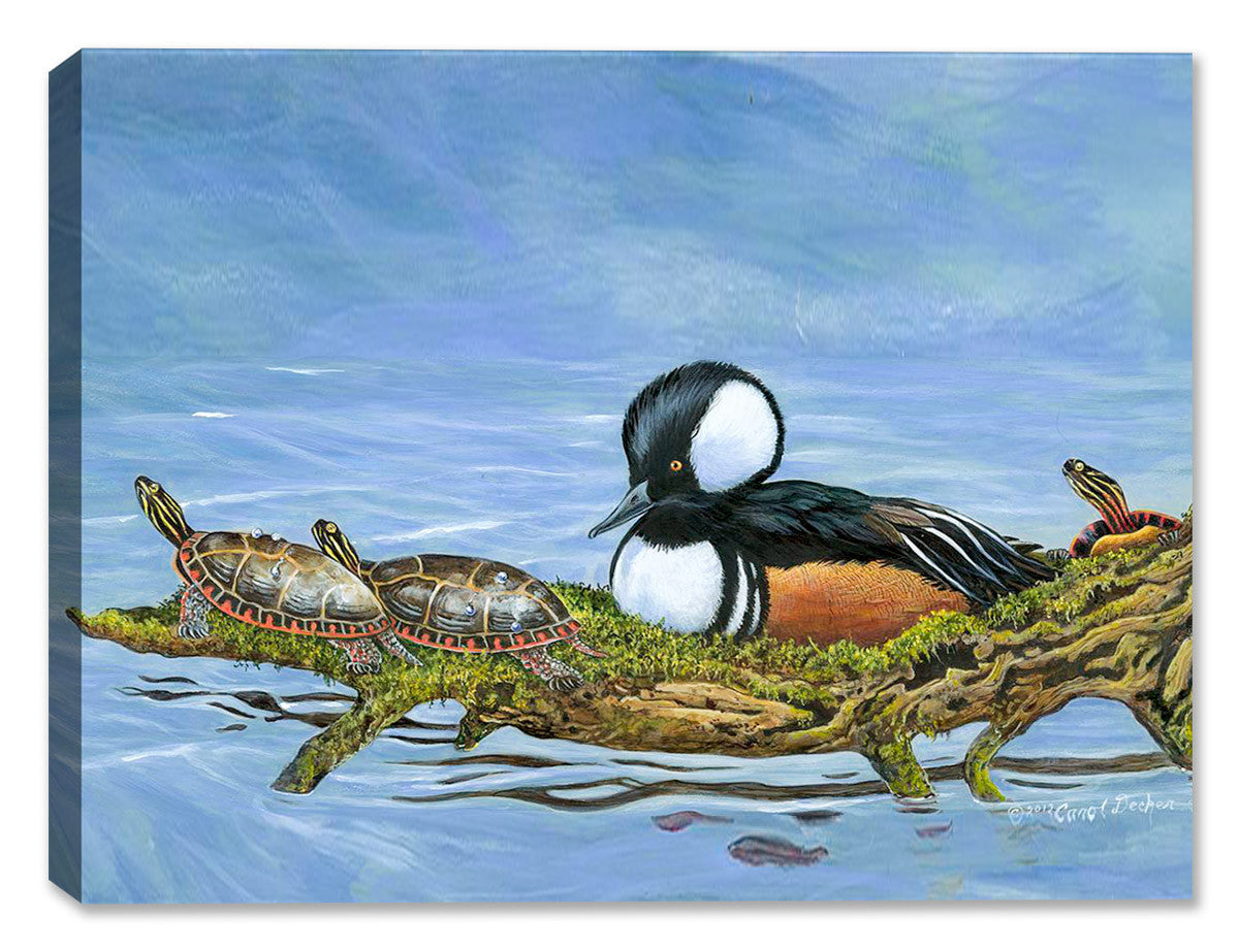 Hooded Merganser - Community Seat - Canvas Art Plus
