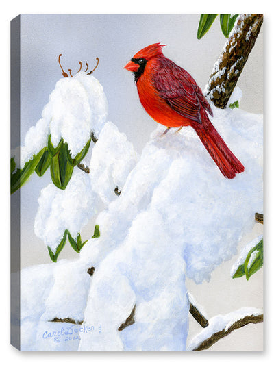Cardinal on Snow - Painting - Canvas Art Plus
