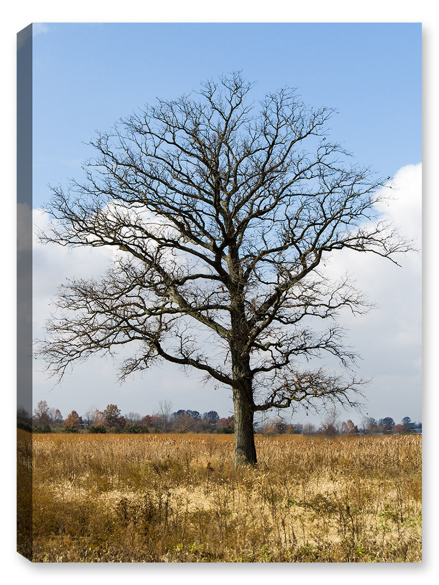 Oak Tree in the Autumn Season - Canvas Art Plus