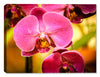 Pink Orchid on Canvas - Canvas Art Plus